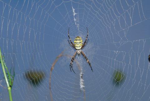 ANIMALS LIKE US: WILD WILD WEB