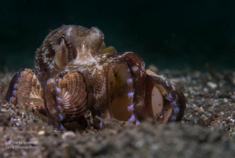 CEPHALOPODS, CONQUEST OF THE SEAS