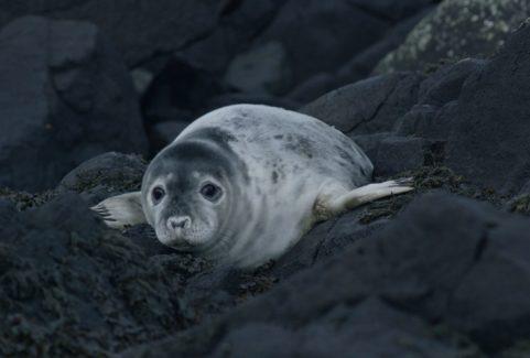 GREY SEALS: A JOURNEY OF SURVIVAL