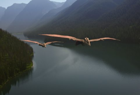 A NEW PREHISTORY:  THE MYSTERY OF THE FEATHERED DRAGONS