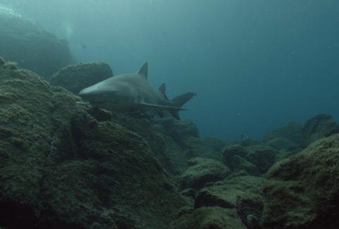 THE SAND EATING SHARK