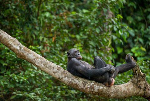 ANIMALS LIKE US: ANIMAL HOMOSEXUALITY